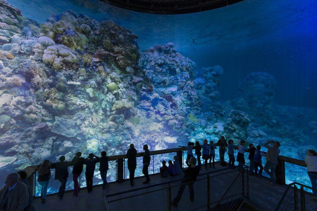 Panometer Leipzig - Great Barrier Reef am 05.10.2015 Foto Tom Schulze tel.    0049-172-7997706 mail  post@tom-schulze.com web  www.tom-schulze.com Nutzung des Bildes nur gegen Honorar, Beleg und Namensnennung